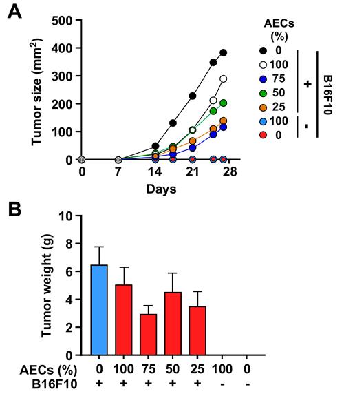 AECs slow tumor cell growth