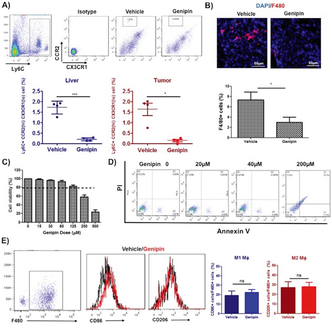 Genipin suppresses TAMs infiltration in tumor microenvironment of HCC.