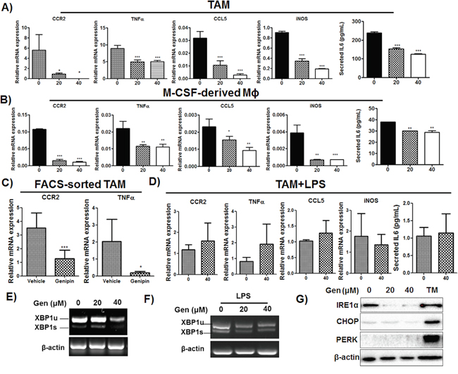 Genipin inhibits activation of TAMs in HCC.