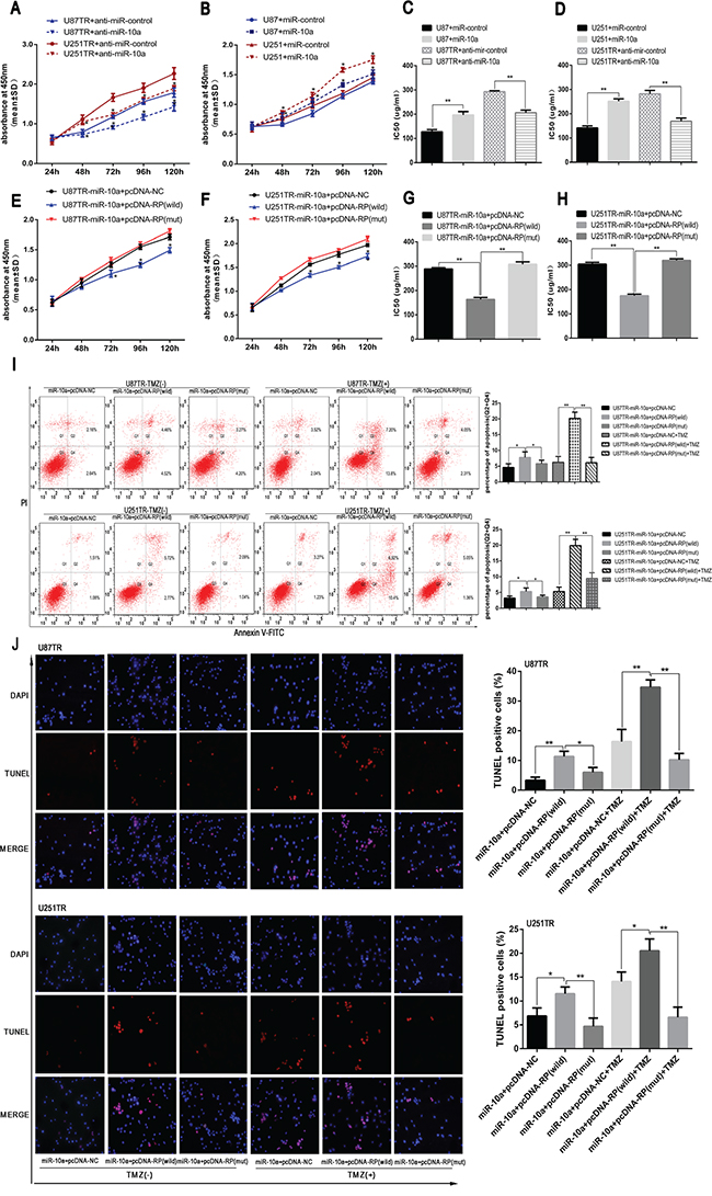 LncRNA RP11-838N2.4 reverses the inhibitory effect of miR-10a on TMZ sensitivity of GBM.