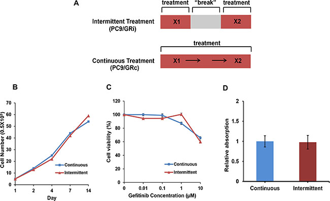 Characterization of two cell lines established with continuous or intermittent exposure to gefitinib.