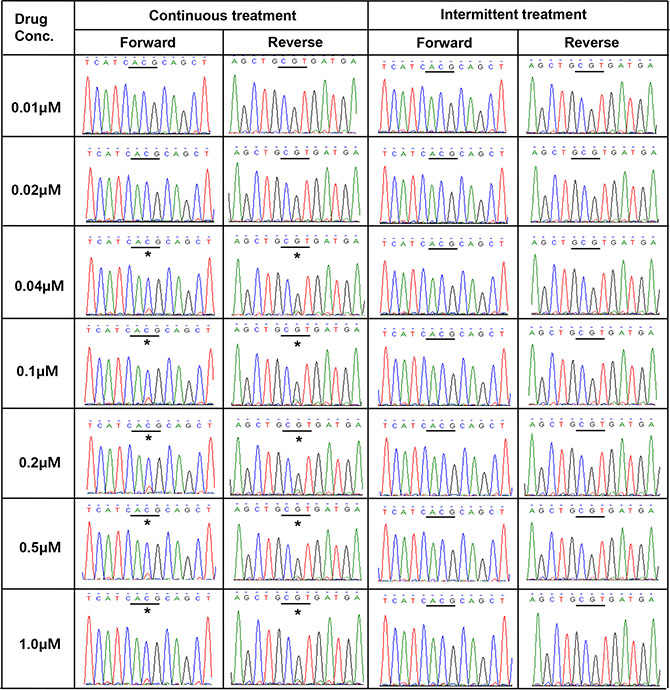 Direct sequencing chromatograms of EGFR exon 20 revealed the presence of T790M (*ACG→ATG) in PC9/GRc cells at gefitinib concentrations ranging from 0.04 μM to 1.0 μM, but not in PC9/GRi cells.
