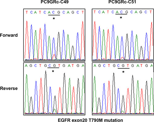 Direct sequencing chromatograms of EGFR exon 20 showed a difference in the peak at the site of the T790M mutation between two different single-cell clones derived from PC9/GRc cells.