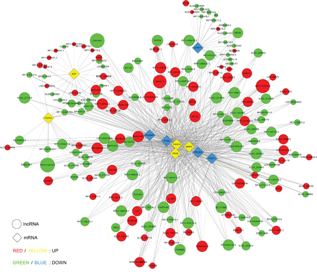 Co-expression network of ten significant mRNAs with their associated lncRNAs.