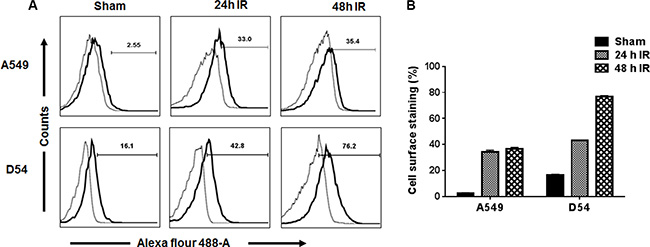 Flow cytometric analysis of the binding of 2C6F3 to the surface of human lung and glioblastoma cells.