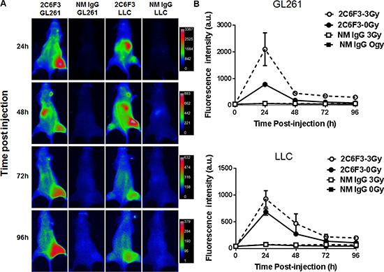 NIR imaging of mice bearing heterotopic tumors.