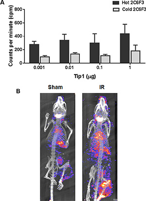 125I labeling of 2C6F3 does not affect the efficacy of binding and SPECT imaging.