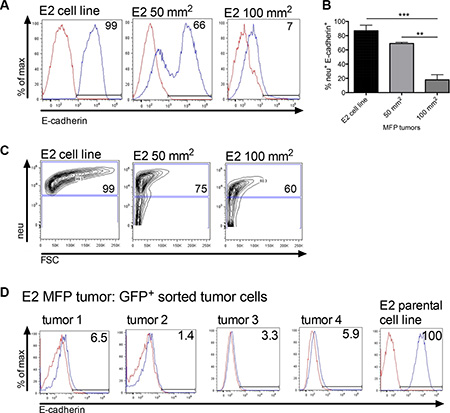 Orthotopically implanted clonal epithelial tumor cells lose E-cadherin expression over time.