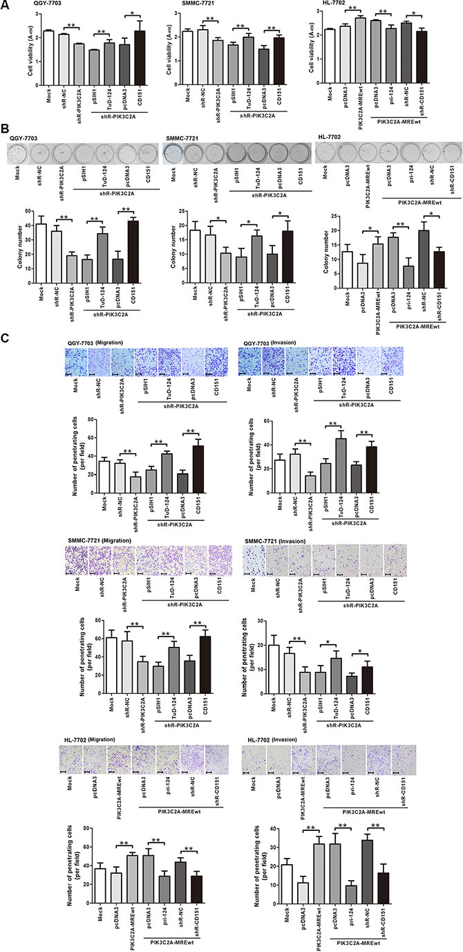 PIK3C2A MREs enhance HCC cell malignancy by alleviating miR-124 mediated CD151 suppression.