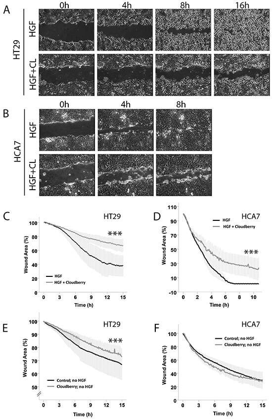 Cloudberry extract inhibits HGF-induced scratch wound closure both in HT29 and HCA7 colon adenocarcinoma cell lines, but without HGF stimulation in HT29 cells only.
