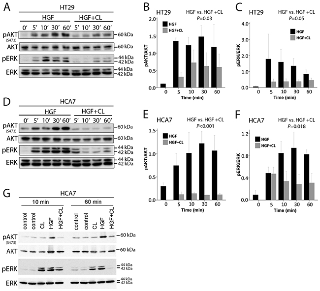 Cloudberry extract inhibits HGF-induced AKT and ERK activation.