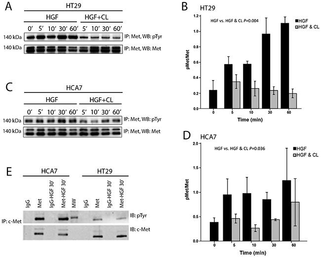 Cloudberry extract inhibits tyrosine phosphorylation of the Met receptor in HGF-treated colon adenocarcinoma cells.
