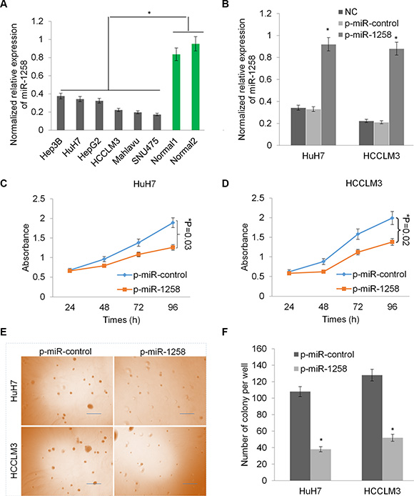 Overexpression of miR-1258 inhibits liver cancer cell growth and proliferation.