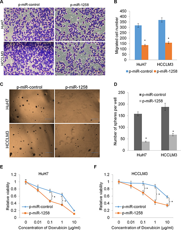 miR-1258 suppresses cell migration and stemness to increase drug sensitivity.
