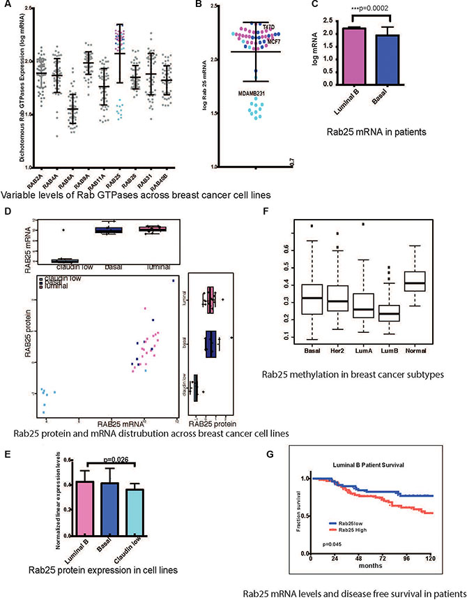 Rab25 expression is a clinical marker in breast cancer patients.