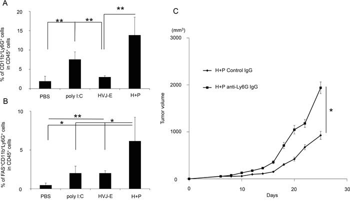 Accumulation and anti-tumor effects of neutrophils in tumor tissue.