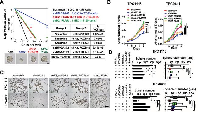 HMGA2 relies on FOXM1 and PLAU to maintain GIC self-renewal.