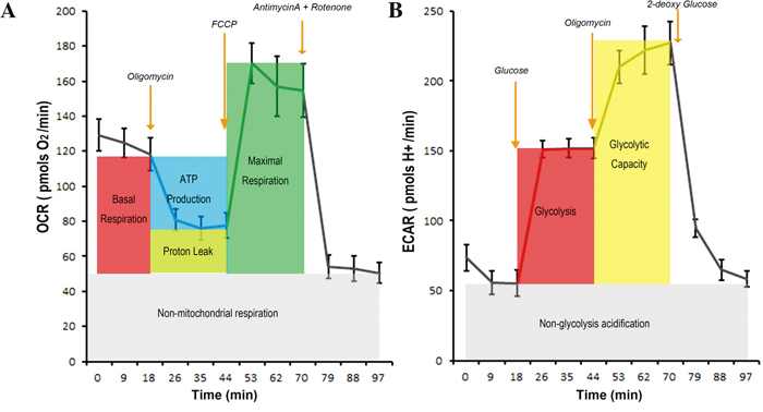 The procedure to measure the OXPHOS-linked oxygen consumption rate and glycolysis-linked proton production rate and the quality controls.
