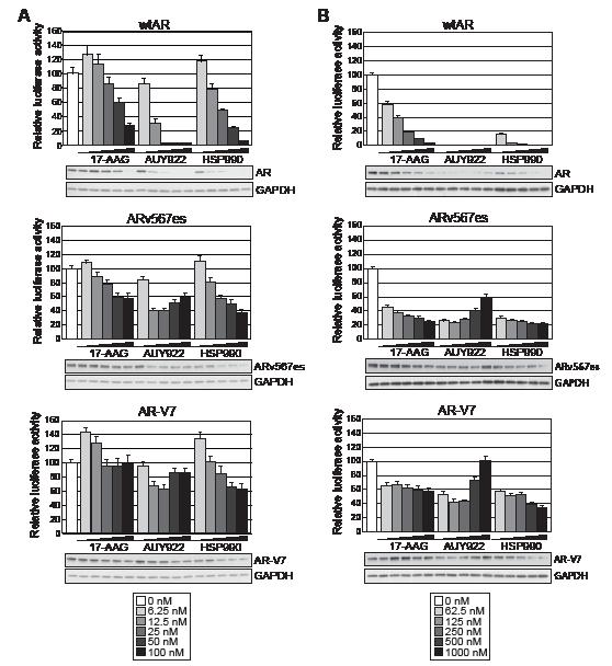 Truncated AR variants exhibit resistance to HSP90 inhibitors.