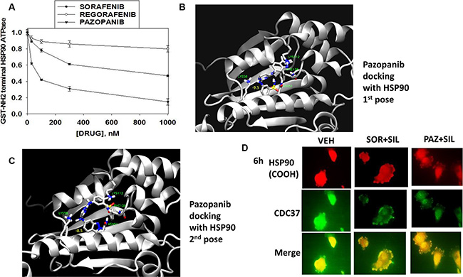Sorafenib and pazopanib inhibit HSP90 ATPase activity; pazopanib docks with the ATP binding site of HSP90.