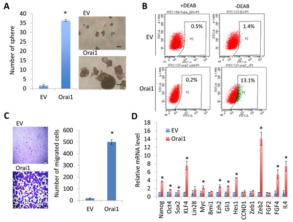 Ectopic Orai1 expression promotes CSC phenotype in non-tumorigenic immortalized oral epithelial cells.