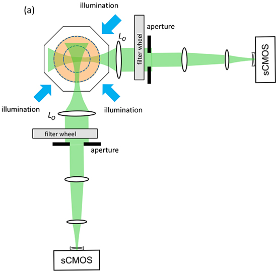 Schematic of dual projection channel multispectral OPT system.