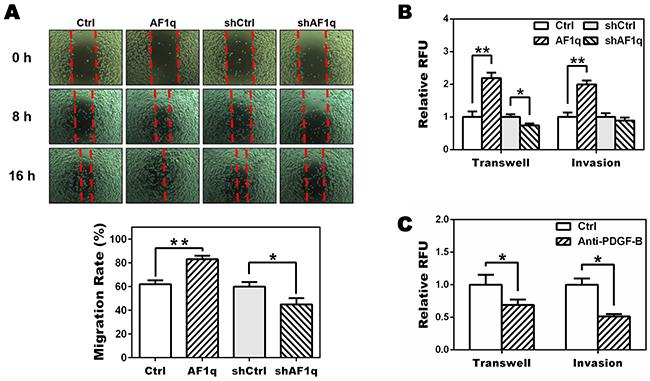 Targeting PDGF-B inhibits migration of MDA-MB-231LN cells.