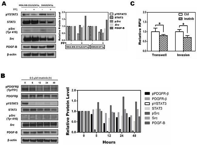 Targeting the phosphorylation of Src inhibits AF1q-induced STAT3 activation