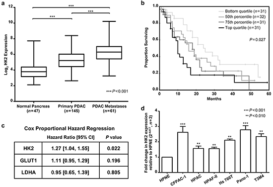 HK2 expression is upregulated in PDAC and associated with a poor overall survival.