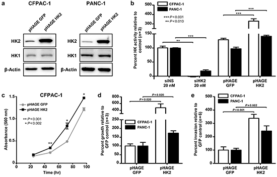 HK2 is sufficient to promote AIG and invasion in PDAC cell lines.