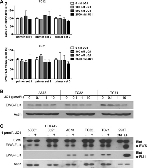 EWS-FLI1 expression is not affected by BET inhibition.