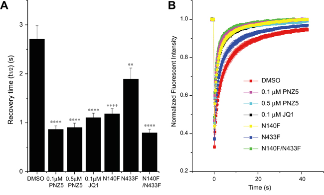 Effect of (+)-JQ1 and PNZ5 on intracellular motility of BRD4.