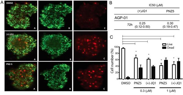 In vitro cytotoxic activity of (+)JQ-1 and PNZ5 on AGP-01 spheroids.