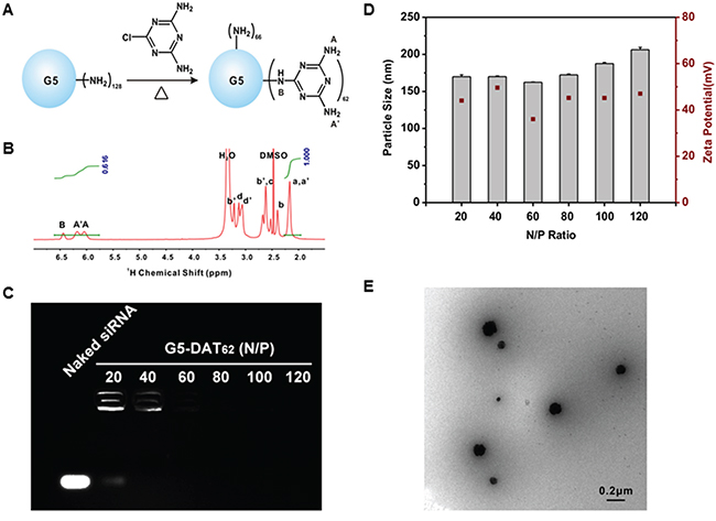 Synthesis and characterization of G5-DAT62 and its complexes with siRNA.