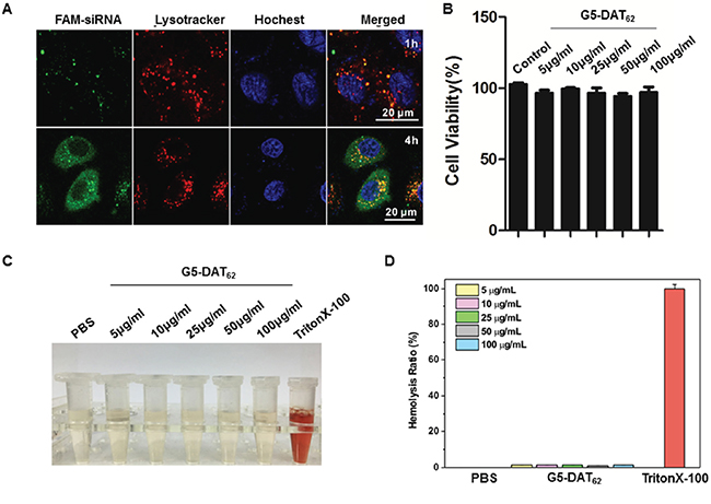 Transfection mechanism and biocompatibility of G5-DAT62.