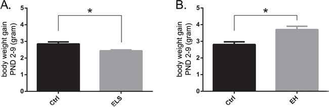 Early life experiences acutely affect body weight of biAT mice.