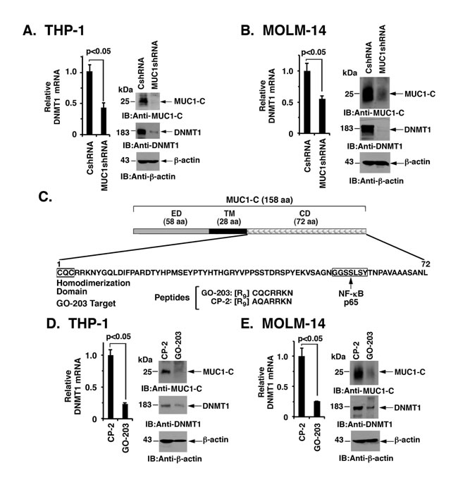 MUC1-C drives DNMT1 expression.