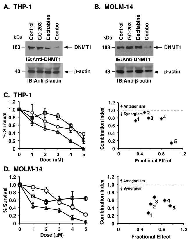 GO-203 is synergistic with decitabine in downregulating DNMT1 expression and in the treatment of AML cells.