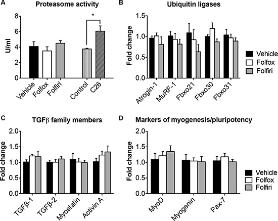Folfiri-mediated muscle wasting is not associated with ubiquitin-dependent proteolysis or with increased expression of TGFβ-associated ligands or markers of myogenesis.