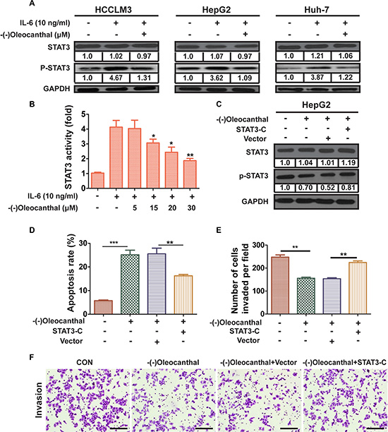 (-)-Oleocanthal inhibits IL6-inducible activation of STAT3 and its anti-cancer effects are dependent on STAT3 expression.