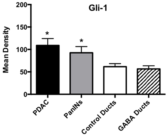 Results of densitometry for the quantitative determination of Gli-1 immunoreactivity.