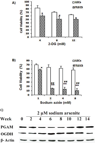 Effects of 2-DG and sodium azide on cell viability of LECs and TLECs.