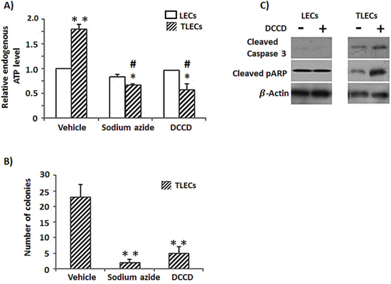 Reduction of cellular ATP content induces expression of apoptotic proteins and reduces tumorigenicity in TLECs.