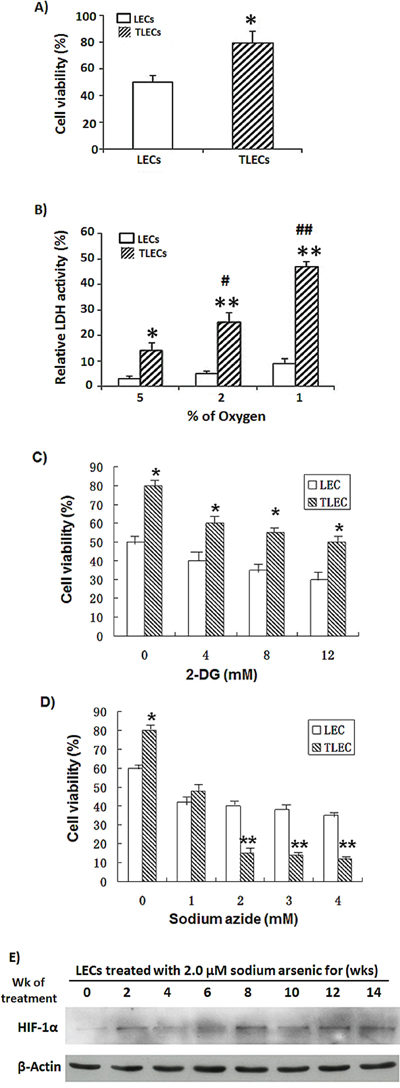 Effects of hypoxia on glycolysis and viability of TLECs.