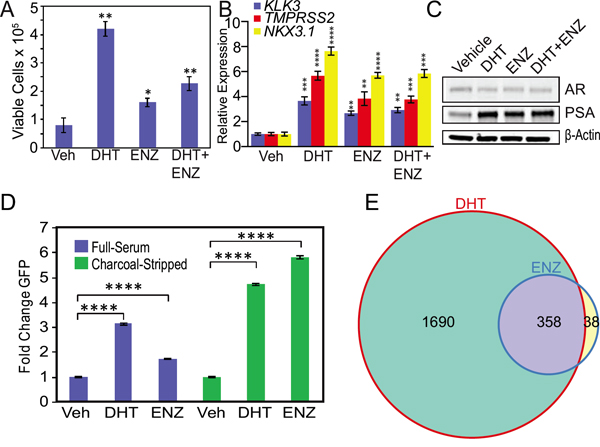 Androgen depletion accentuates enzalutamide agonism of mutant F877L AR.