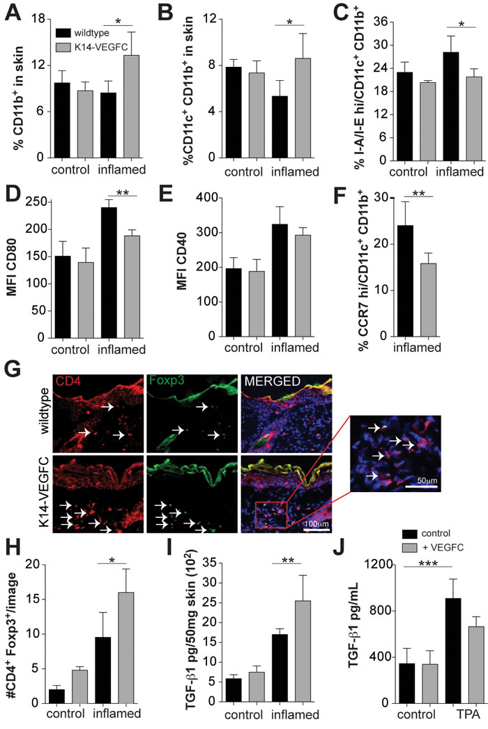 Inflamed skin of K14-VEGFC mice has elevated numbers of immature CD11c+CD11b+ cells and increased proportions of regulatory T cells.
