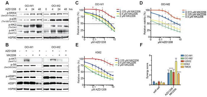 Activation of the p38 pathway upon PIM inhibition.