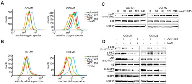 PIM inhibition elevates ROS and mitochondrial superoxide levels.