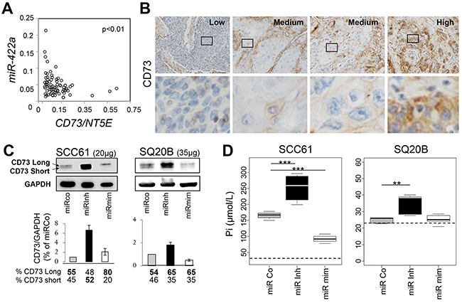 MiR-422a targets NT5E/CD73.
