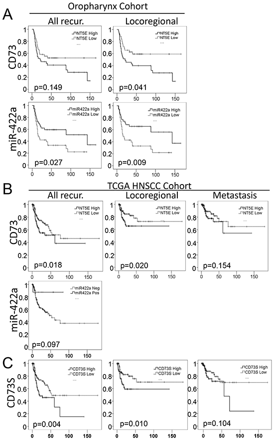 MiR-422a and CD73 expression levels are predictive of loco(regional) recurrence in two independent cohorts.